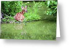 Fawn White Tailed Deer Wildlife Greeting Card