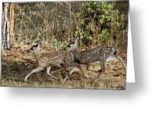 Fawns Running Greeting Card