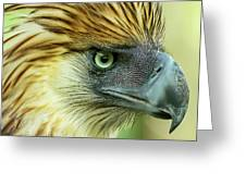 Fearless Philippine Eagle Greeting Card