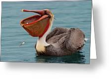 Feasting Brown Pelican  Greeting Card