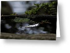 Floating On A Still Pond Greeting Card
