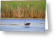 Feather Dance Greeting Card
