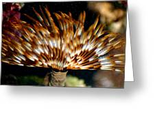 Feather Duster Greeting Card