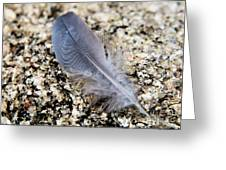 Feather Found On A Granite Rock Greeting Card