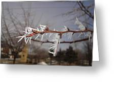 Feather Frost Greeting Card