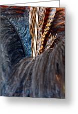 Feather Fun Greeting Card