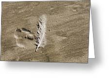 Feather Print Greeting Card