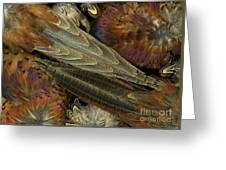 Featherdance Greeting Card