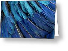 Feathered Greeting Card