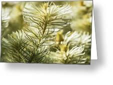 Featherheads Greeting Card