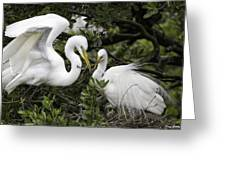Feathering Their Nest Greeting Card