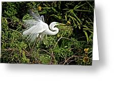 Beautiful Feathers And Foliage Greeting Card