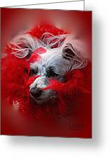 Feathers Of Red Greeting Card