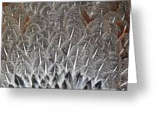 Feathers Of The Wild Hen Greeting Card