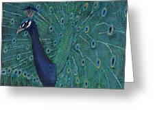 Feathery Fan Greeting Card