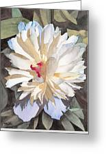 Feathery Flower Greeting Card by Ken Powers