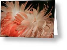 Featherz Greeting Card