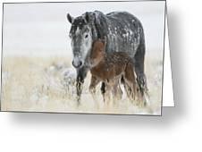 February Colt Greeting Card