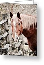 February Horse Portrait Greeting Card