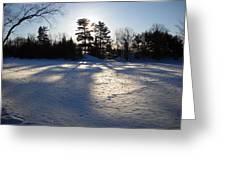February Pine Tree Shadows Greeting Card