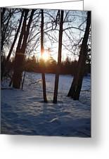 February Sunrise Alongside A Tree Greeting Card
