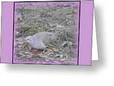 Feeder Friend In Light Fuscia Greeting Card