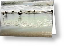 Plundering Plover Series 2 Greeting Card