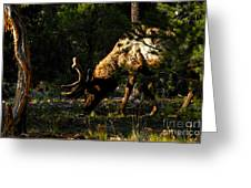 Feeding Elk Greeting Card