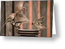 Feeding Finches Greeting Card