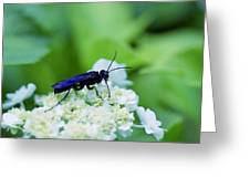 Feeding Insect Greeting Card