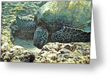 Feeding Sea Turtle Greeting Card