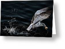 Feeding Seagull Greeting Card