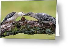 Feeding Time Greeting Card