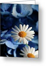 Feeling Blue Daisies Greeting Card