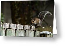 Feeling Squirrelly Greeting Card