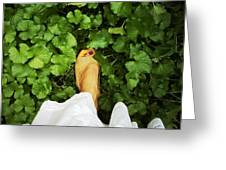 Feet Around The World #3 Greeting Card
