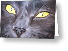 Feline Face 1 Greeting Card