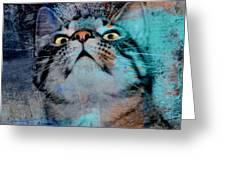 Feline Focus Greeting Card