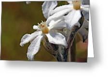 Felted Swamp Flower Greeting Card