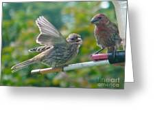 Female And Male Crossbills    August  Indiana Greeting Card
