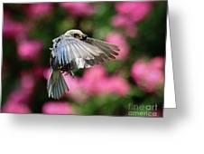 Female Bluebird In Flight Greeting Card