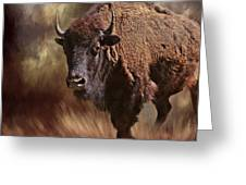 Female Buffalo Greeting Card