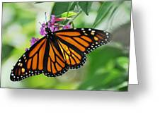 Female Butterfly Greeting Card