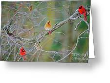 Female Cardinal And Friends Greeting Card