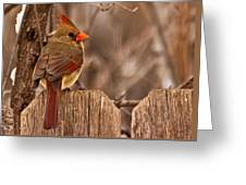 Female Cardinal On The Fence Greeting Card