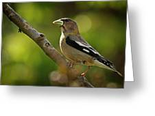 Female Evening Grosbeak - 365-55 Greeting Card