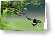 Female Great Mormon Butterfly On A Branch Greeting Card