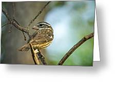 Female Grossbeak Looking Back Greeting Card