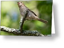 Female House Sparrow Greeting Card