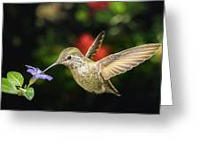 Female Hummingbird And A Small Blue Flower Left Angled View Greeting Card